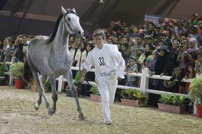 معرض الفرس انفتاح كبير على جمهور البراعم يساهم في إبراز دور مربي الخيول العربية