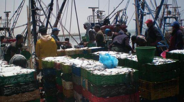 إضراب في قطاع الصيد البحري للكشف عن أخطبوط التهريب