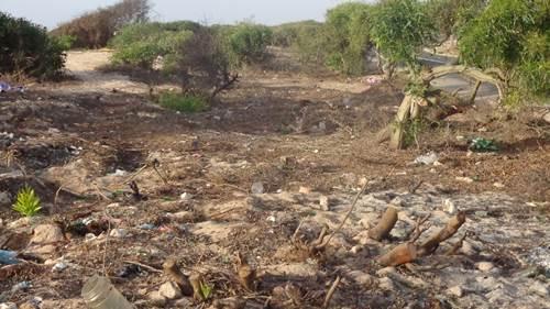 الجديدة / جماعة مولاي عبد الله: تدمير بيئي خطير بجانب الشاطئ