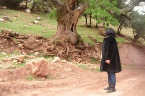 حديث شجرة…