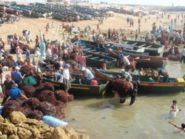 مهنيو قطاع الطحالب البحرية يطالبون بإلغاء قرار تحديد أجل التصدير