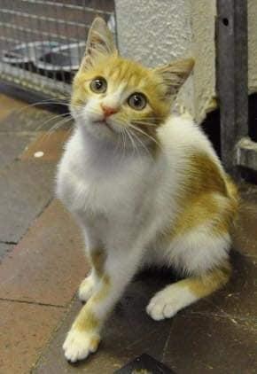 قطة ﻋﻤﺮﻫﺎ ﺷﻬﺮ ﻭﻧﺼﻒ ﺗﻘﺮﻳﺒﺎً ﻛﺎﻧﺖ تتجول ﻓـﻲ ﻣﻄﺎﺭ ﺍﻟقاهرة ﺑﻴﻦ النفايات في ﻛﺎﻓﻴﺘﺮﻳﺎ ﺍﻟﻤﻄﺎﺭ ﻭﻣﻨﻄﻘﺔ ﺍﻟﺸﺤﻦ ..