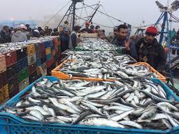 الجديدة…تنظيم لقاء لتدارس مشاكل قطاع الصيد البحري